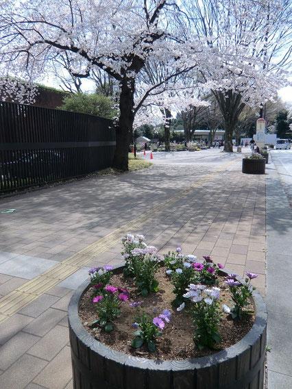 ●神代植物公園の入り口の近く。プランターにも可愛い花が咲いていました