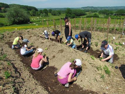 Classe verte en Bourgogne au jardin pédagogique en permaculture