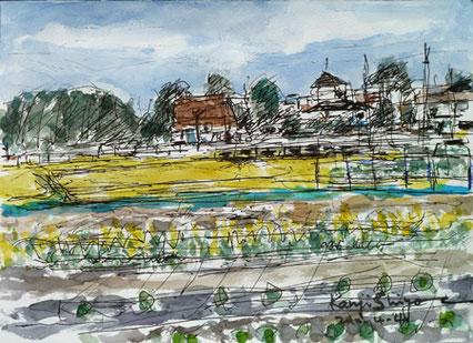境川遊水地公園付近の菜の花畑