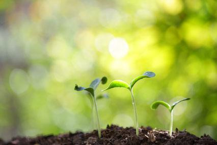 Sprießende Pflanzen mit grünem sonnigen Hintergrund