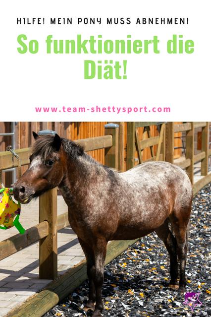 Übergewicht bei Pferden erkennen - so kann Dein Pfed abnehmen!