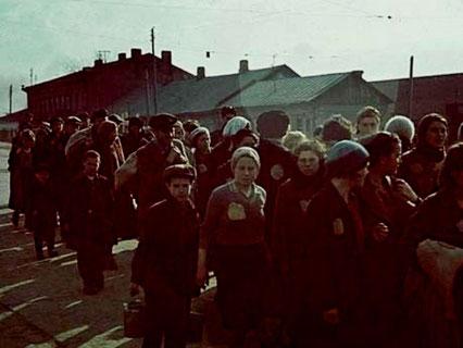 Selektion i tilintetgørelseslejren Auschwitz