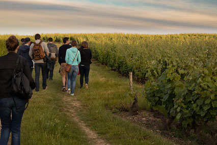 guided-walk-and-guided-tours-in-Vouvray-vineyard-wine-tasting-Loire-Valley-Amboise-Tours-wine-tours-Myriam-Fouasse-Robert