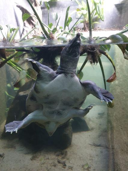 Schildkrötenstation im Nationalparkt von Cuc Phuong bei Ninh Binh