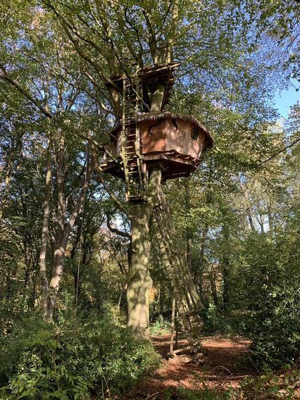 Cabane perchée à 12 m dans un hêtre majestueux. Terrasse 4 m au-dessus, à 16 m, accessible par une échelle droite.