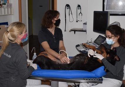 Rebekka gemeinsam mit Tierärztin Sina Brombacher und TFA während dem Ultraschall.