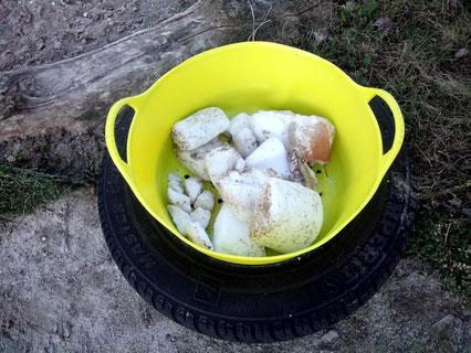 Die neue Stelle für etwas zerbröselte Salzlecksteine