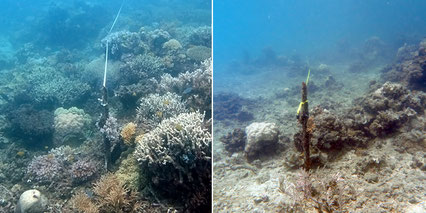 Australia's north-west oceanic shoals support the highest fish diversity for middle light level coral reefs (20─80 metre depth) globally. Image © AIMS