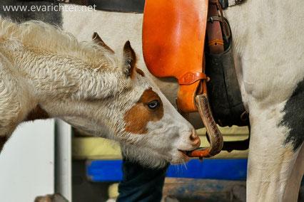 Blog, Eva Richter, Pferde, Pferdeshooting, Pferdefotografie, Richter-Kernreich, Pferd-Vital-Coach
