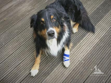 Wandern mit Hund, mein Wanderhund Ari, Andrea Obele, Pfotenverband, erste-Hilfe-set
