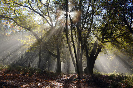 Wald mit Sonnenstrahlen.