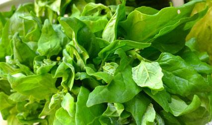Spinat,Espinafre,Spinach,Gemüse,Legumes,Vegetables,Martins-Kulinarium,Carvoeiro,Algarve,Portugal