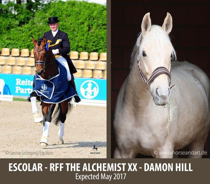 Escolar foal out of a Westfalian mare by RFF The Alchemist xx - Damon Hill - Argwohn I