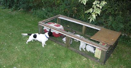 5 kleine Kaninchen hatten ihre Mama mit nur 10 Tagen verloren.