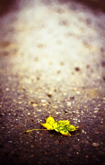 einsames gelbes Blatt - Herbst