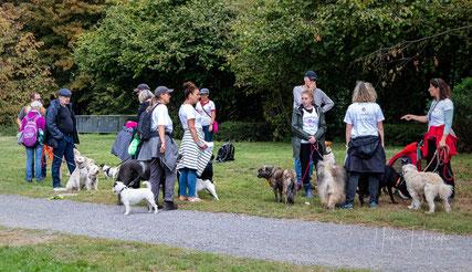 SaLu Dogs, Foto: Heikes Fotografie