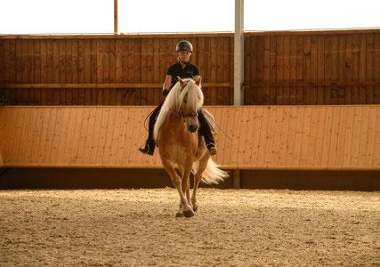 Das gleiche junge Pferd einige Monate später bei den ersten Traversalen.
