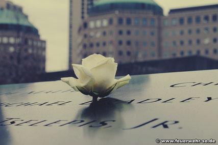 Eine Rose im Gedenken an die Opfer im 9/11 Memorial am Ground Zero