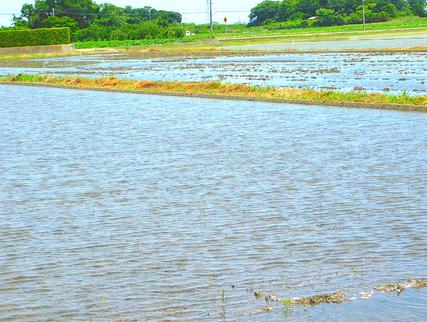 綺麗な山水を流し込んだ稲田