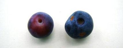 (左)少し赤みの残る未完熟果 (右)治ったキズ