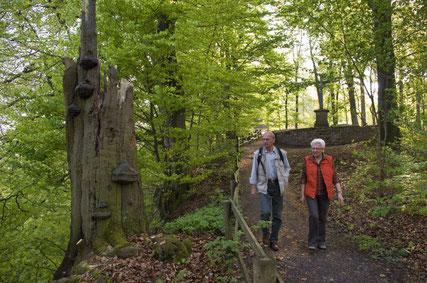 Wandern auf den Hermannshöhen © Bad Driburger Touristik GmbH