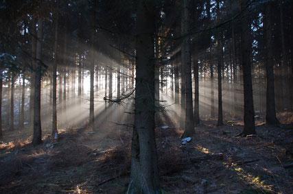 Mystischer Wald © S. Köneke, Stadt Willebadessen