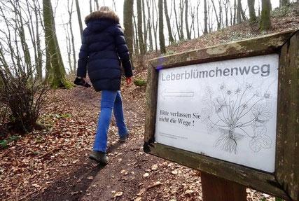 Leberblümchenweg © Ingmar Bojes