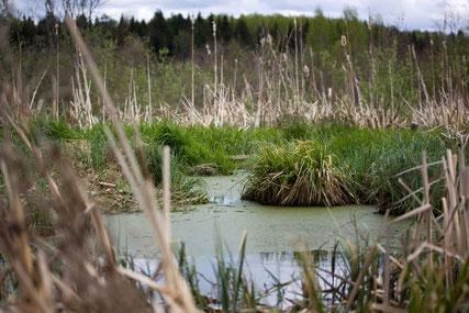 Moorlandschaft © GesUndTourismus Horn-Bad Meinberg GmbH