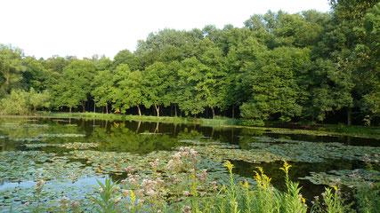 Fischteiche © Tourist Information Paderborn