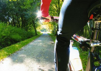Mountainbike-Fahrer im Teutoburger Wald © T. Kurz