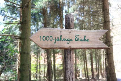 1000-jährige Eiche © Schloß Holte-Stukenbrock