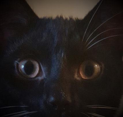 Ein Kater bei dem am rechten Auge die Augenbrauen fehlen