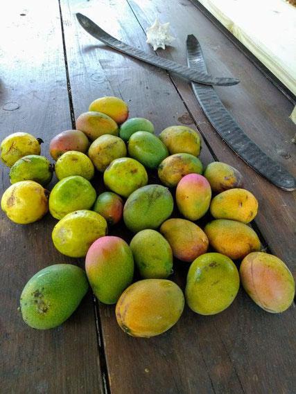 Mangues et Goyaves jardin Couleurs Antilles