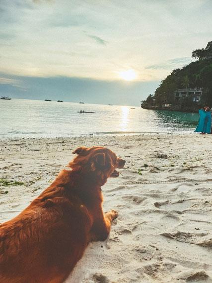 Am Strand von Boracay hatten wir regelmäßigen Besuch