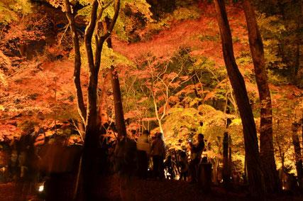 一般社団法人長瀞町観光協会提供