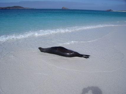 Kreuzfahrten zu den Galápagos Inseln mit PERUline