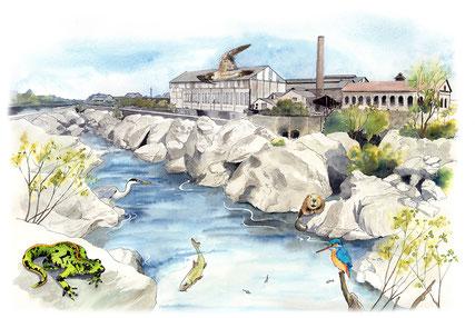 illustration, écosystème, nature, saut du Tarn, saut de sabo, Albi, saint Juery
