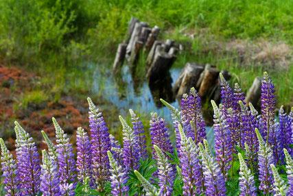 Naturmoorfeld © Bad Driburg Toursitik GmbH / Fotograf Andreas Salmon