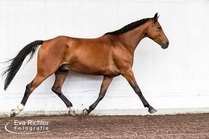 Richter-Kernreich, Pferde, Pferdeshooting, Pferdefotografie