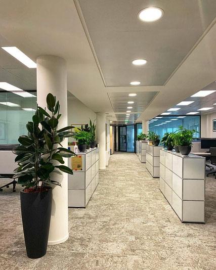 Location et entretien de plantes pour ces bureaux à Paris