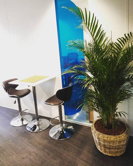 Paysagiste d'intérieur: location de plantes pour ces bureaux
