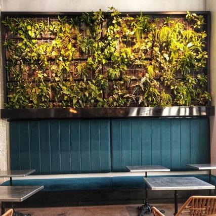 entretien de murs végétaux à Paris