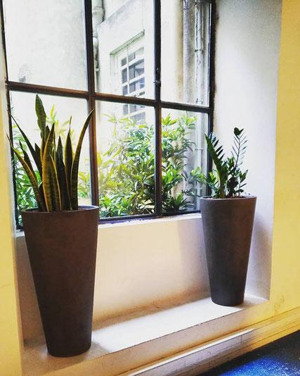 Location et entretien de plantes pour cet espace de coworking à Paris