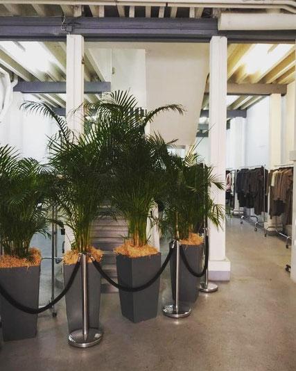 location de plantes d'intérieur à Paris