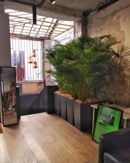 location de plantes d'intérieur pour un événement à Paris