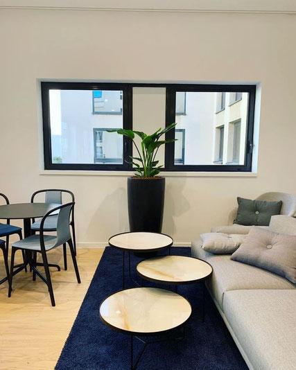 location de plantes pour les bureaux de cette entreprise à Paris