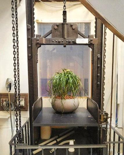 Paysagiste intérieur à Paris: location de plantes pour les bureaux de votre entreprise