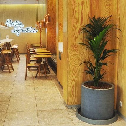 Entretien et location de plantes à Paris pour vos bureaux