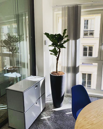 Paysagisme d'intérieur pour votre entreprise à Paris
