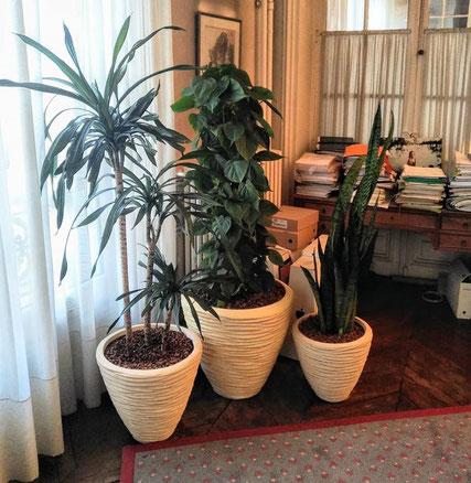 Contrat d'entretien des plantes d'intérieur du bureau à Paris